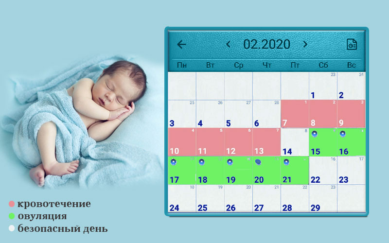 Календарь овуляции помогает забеременеть мальчиком