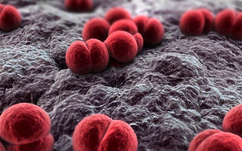 Научные сведения о Менингококковая инфекция у детей