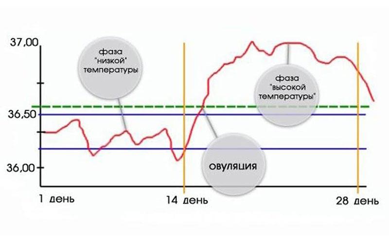 измерение температуры чтобы узнать в какой день не предохраняться
