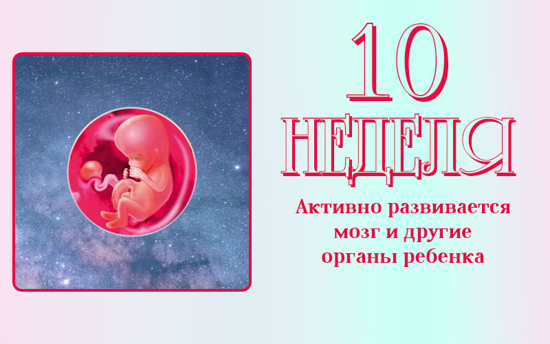 10 неделя беременности