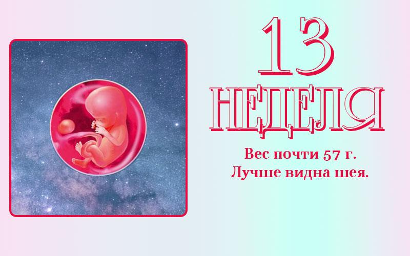 Развитие плода на 13 неделе