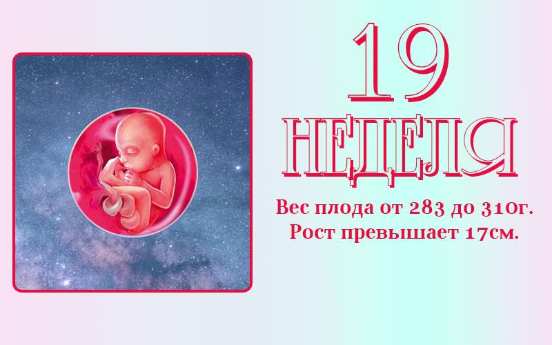Развитие плода на 19 неделе беременности
