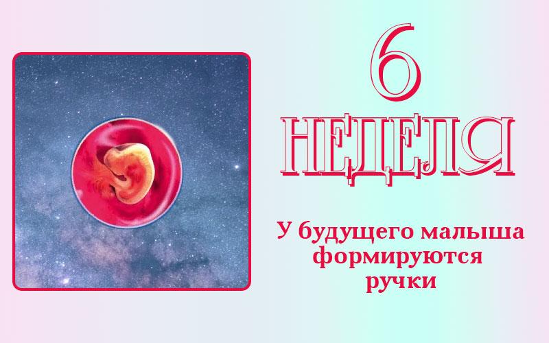 Развитие плода на 6 неделе беременности