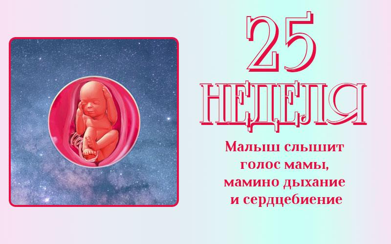 Развитие плода на 25 неделе беременности