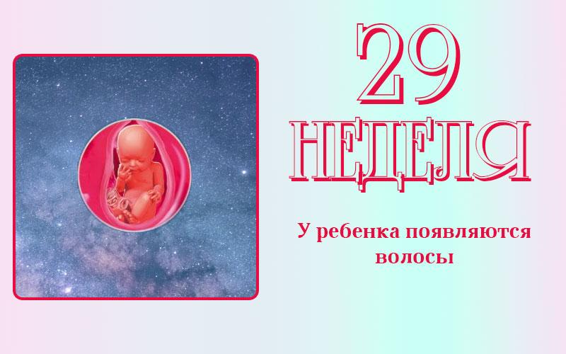 Развитие плода на 29 неделе беременности