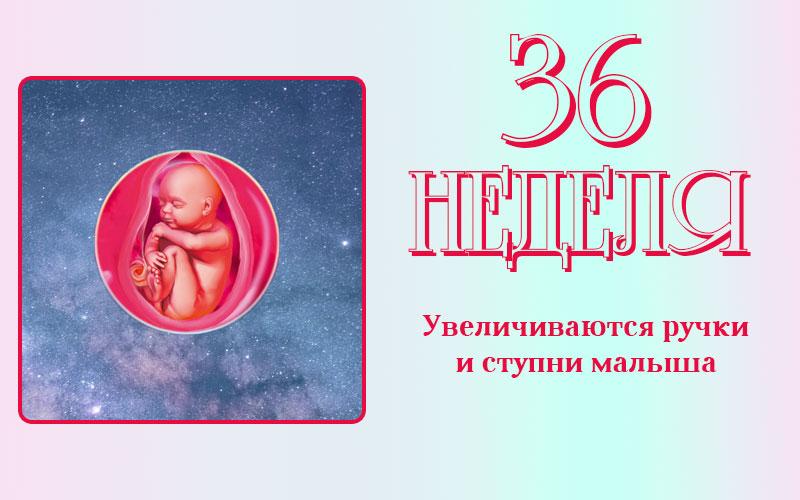 Развитие плода на 36 неделе беременности