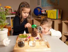 Система педагогики Монтессори: основные принципы и суть методики раннего развития