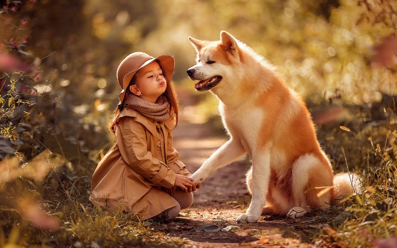 Собака – защитник ребенка - ребенок хочет собаку